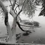 @cecchetripposky-Parco-Nazionale-Foreste-Casentinesi