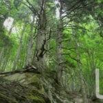 parco foreste casentinesi 003